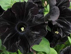 Black Flowers Wedding