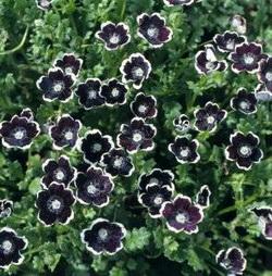 Silk black flowers black flowers silk black flowers mightylinksfo